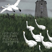 whoopers by helen pletts and rogin bergen